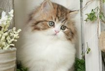 Cute | Cats & Kittens / Cute and sweet cats and kittens