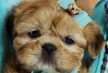 Cute | Dogs & Puppies / Cute and sweet dogs and puppies