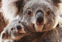 Cute | Animals / Cute animals - coalas, pandas, monkeys, elephants, etc.