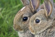 Cute | Bunnies / The cutest bunnies, rabbits and hares