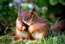 Cute | Squirrell / Cute