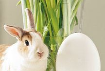 Easter bunny / Easter rabbits, hares, bunnies