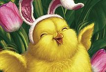 Easter chick / Cute Easter chicks