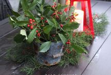 Christmas holly / Holly berries