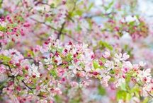 Flowers & Landscaping / Beautiful flowers.  Inspiring landscapes.