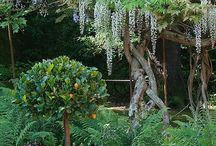garden ~ details / details | architecture  / by Lara Dennehy Horsting
