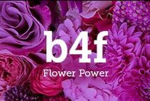 b4f X Flower Power