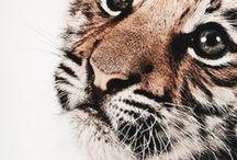 animals♠
