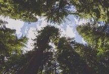 nature♥