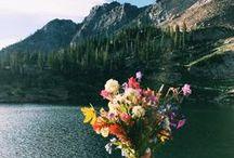 flowers&plants♣