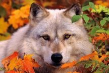 Animals / Beautiful and adorable pictures of various animals I like. / by Myra Taylor Higinbotham