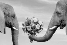 Cutsie Animals / by Hayley Kessel