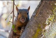 Squirrels / by St. Olaf College