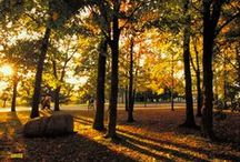Seasons / by St. Olaf College