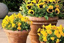 Grow Your Garden / by Winn-Dixie