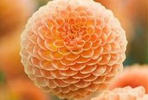 Awesome Flowers / Awesome Inspirational Flowers and great Photography