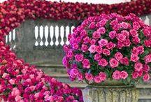 Pink Flowers / Beautiful Pink Flowers