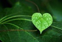 Heart Shaped Flowers & Plants