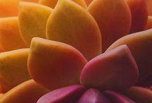 Succulents / Beautiful Succulents