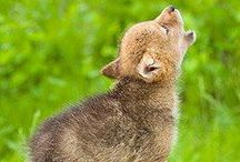 M ◘◘ N / Come  Howl  with  Me! / by Shirley Aston-Andre Golden