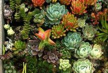 The Garden / Outdoors / by Emily Weisz