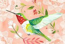 Birds- illustrations / Pájaros - ilustraciones