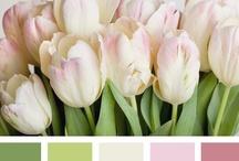 Colors... / by Renee Barnhart