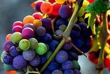 Colorific! / See color. Breathe color. Eat color. Make color. Think color. Wear color. Invent color. Dream color.