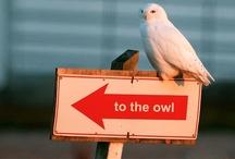 Owlie / by Cathy Baranski