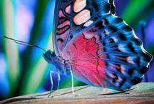Beautiful Butterflies / by Kayla Arlington👑