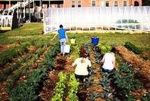 SIFT / Small-Scale Intensive Farm Training, or SIFT is a project of the National Center for Appropriate Technology (NCAT).  Through this innovative program, we're working to create food security, economic revitalization, and environmental protection through small-scale intensive farm training.