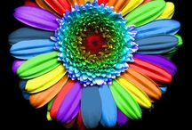 Rainbow ☂ / by Kayla Arlington👑