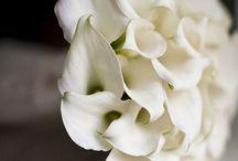 Flowers !!!! / Per ricordare fiori giardini campagna balconi e...... profumi e..... altro ancora.