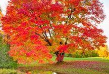 Autumn Splendor / by Karen Benfield