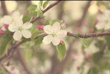 spring / by Amber Kaye