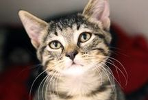 Adoptable Cats / by SPCA of Texas