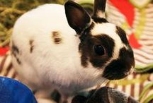 Adoptable Pocket Pets / by SPCA of Texas