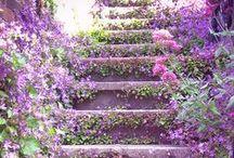 Gardening Ideas / by Amanda Arnold
