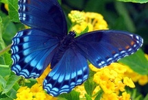 Butterflies, Moths and Other Lovely Insects / by Sharon Page