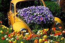 Gardening / by Vanja