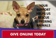 SPCA of Texas' Mission / To provide exceptional care and a loving home to animals in need.