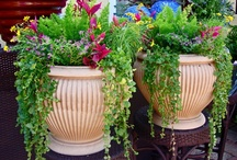 Florida Container Gardening and other Interesting Garden ideas / by Port Charlotte Homebuilders