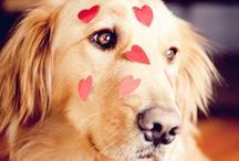 Valentine's Day Pets / by SPCA of Texas