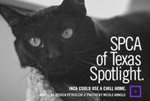 Bark About Town / Here, you'll find news articles, stories and video coverage about the #SPCAofTexas and our adoptable pets!  / by SPCA of Texas