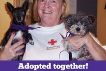 Happy Adoption Stories / by SPCA of Texas