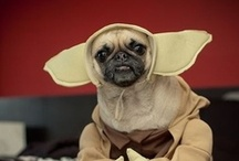 Star Wars Pets / Celebrate May the 4th Be With You and take a peek at some of the internet's funniest Star Wars dogs and cats! / by SPCA of Texas