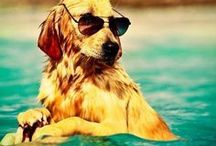 Summer Pets  / by SPCA of Texas