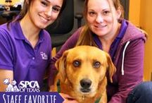 Staff Favorites! / Every other week, we feature a staff favorite adoptable animal looking for a loving home! Do you have an SPCA of Texas favorite, too?  / by SPCA of Texas
