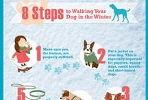 Dog Care Tips / http://www.spca.org/page.aspx?pid=312 / by SPCA of Texas