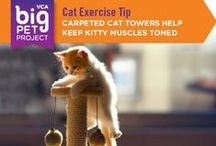 Cat Care Tips / http://www.spca.org/page.aspx?pid=311 / by SPCA of Texas